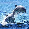 Picture of 4D Dolphin