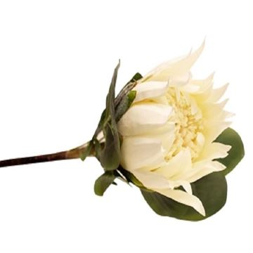 Picture of 62cm cream protea