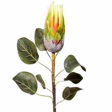 Picture of 62cm green protea