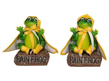 Picture of 16cm rain frog