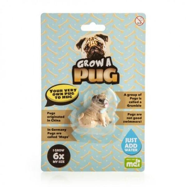 Picture of Grow a pug